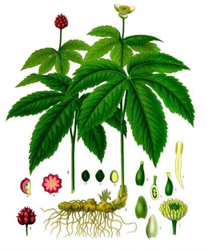 פורמולת צמחים לטיפול בשעלת