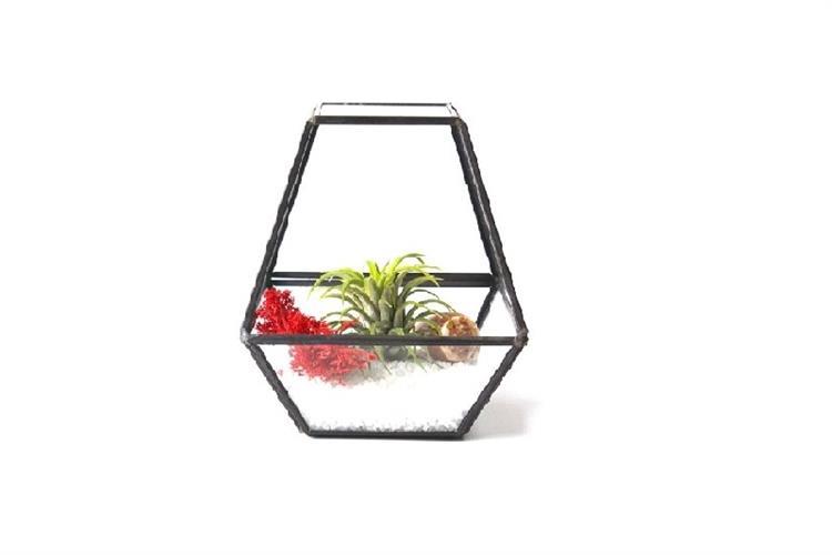 טרריום זכוכית - מחומש