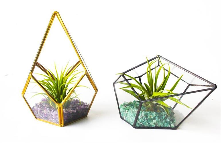 טרריום זכוכית - טיפה