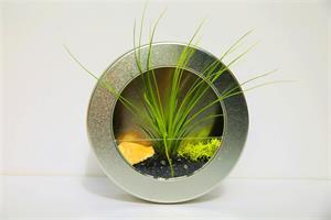 גלגל כסוף מעוצב + צמח אוויר