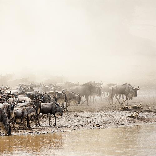 טנזניה - ספארי לכל המשפחה