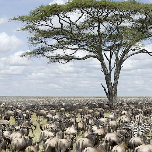 טנזניה ועונת ההמלטות | יום ד׳, 24.1.18 | מרצה: שלמה כרמל
