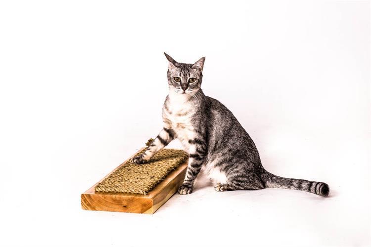 מדף גירוד לחתול