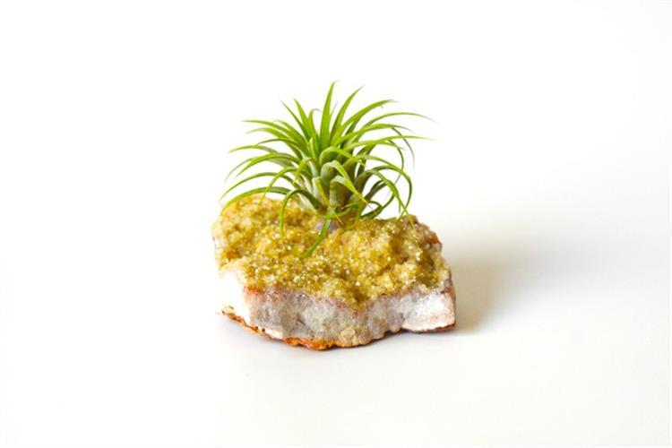 אבן סיטרין & צמח איוננטה