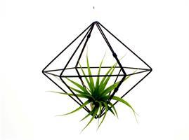 מובייל גיאומטרי + צמח אוויר