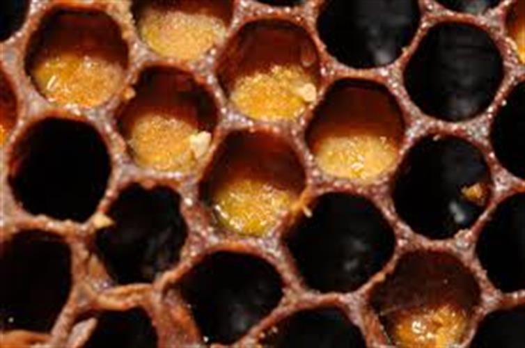 שעוות דבורים טהורה - 100 גרם