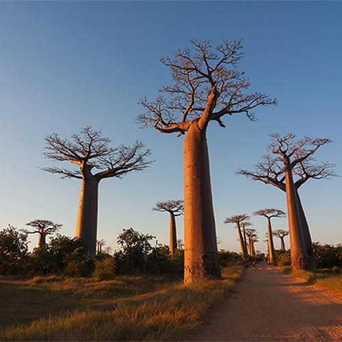 מדגסקר - טבע שאין דומה לו